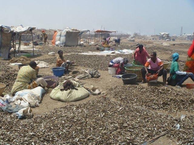 Emission : Les femmes transformatrices de poisson de Khelcom face aux changements climatiques
