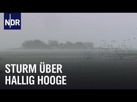 Land unter auf Hallig Hooge | die nordstory | Teil 1 | NDR Doku