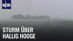 Land unter auf Hallig Hooge | die nordstory | NDR