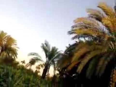 عمو جمال الريف المصري المنيا ملوي ابوقلته