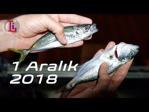 Takoz istavrit  - Çinekop 1 Aralık 2018 | İstanbul Boğazda Balık Avı