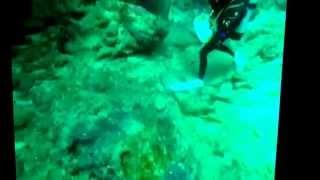 沖縄は石垣島でダイビングした時の水中の映像(・ω・) 誰が誰だか分から...