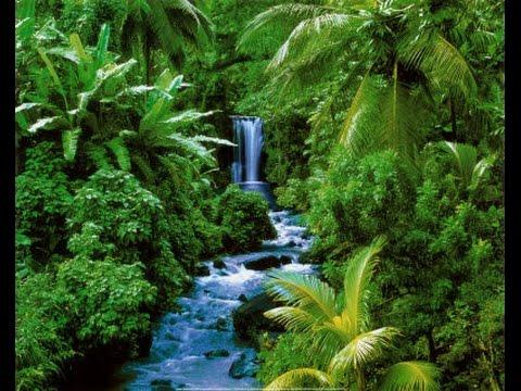 Gambar Hutan Hujan Daerah Sedang
