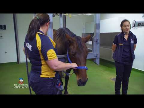 Tour the Equine Health & Performance Centre - The University of Adelaide