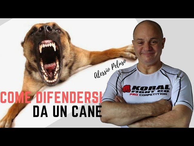Difesa personale, difendersi da un cane