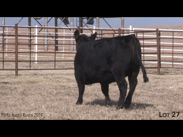 Payne Angus Ranch Lot 27