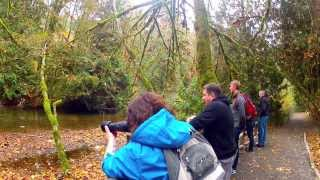 Goldstream Provincial Park, More Than Just a Salmon Run