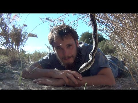 South-Western Carpet Python - Cold Blooded Cousins