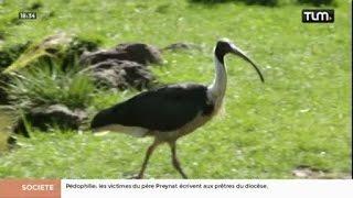 Animation bush australien au parc des oiseaux