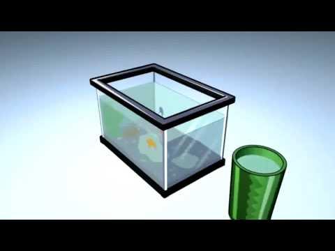 How To Maintain Your Aquarium (Petco)