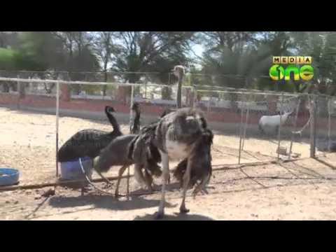 Corona Virus: stringent checking in Qatari farms