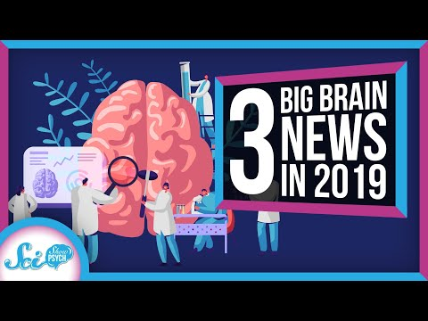 3 Big Things We Learned About the Brain in 2019