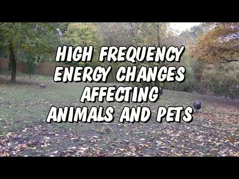 HIGH FREQUENCY ENERGY CHANGES AFFECTING ANIMALS AND PETS