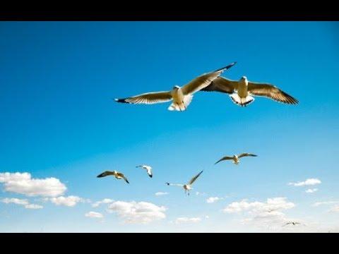 Птица. Музыка Сергея Чекалина. Bird. Music Of Sergei Chekalin. 새. 세르게이 체 칼린 음악
