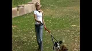 Pain Free Dog Walking Leash, Collars and Harnesses with Larz Dog Products