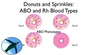 Blood Types:  ABO and Rh (with donuts and sprinkles!) thumbnail