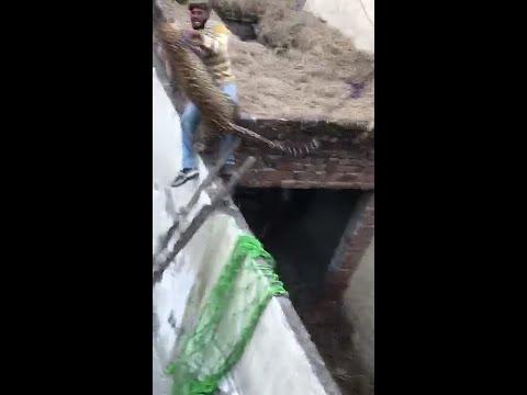 देखिए क्या हुआ जब एक (तेंदुआ) चिता  पंजाब के गांव में गुस गया