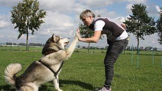 Easy Dog Training Methods