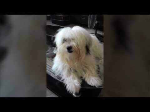 BAMBI THE DOG: EVOLUTION