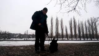 Как научить собаку выполнять команды без лакомства и когда надо давать лакомство?