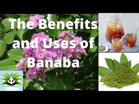 The Benefits and Uses of Banaba
