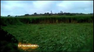 ¡Impresionantes agrogramas en Tala, Jalisco!
