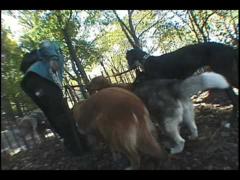 Dog Soldiers 5/5  New York dog walking documentary