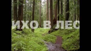 """""""Тихо в лесу"""". Исполняет автор Владимир Лейкин"""
