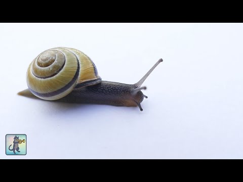 Beautiful Snails! - 2 HOURS Best Relaxing Music & Amazing Nature Scenery (1080p HD)