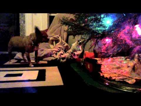 Shake Up Christmas Chihuahua Style