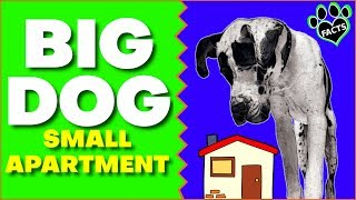 7 Large Dog Breeds For Small Apartments and Tiny Homes