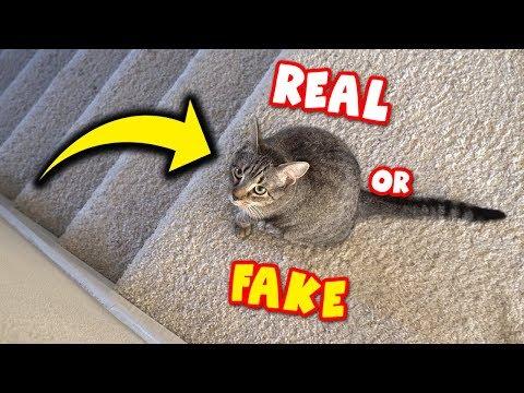 IMPOSTOR DUDE THE CAT??