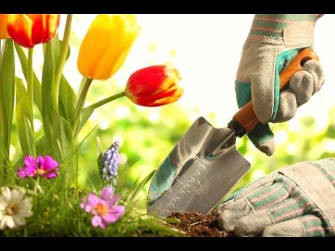 Productos especiales para la jardiner a en casa tvagro - Jardineria en casa ...