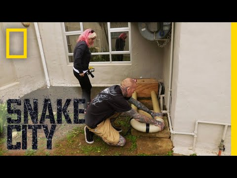 The Tyrant of the Trailer Park | Snake City