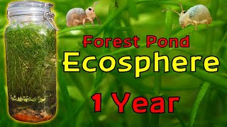 ISOLATING Pond Water inside a JAR for a YEAR! │ Woodland Pond Ecosphere - 1 Year Update!