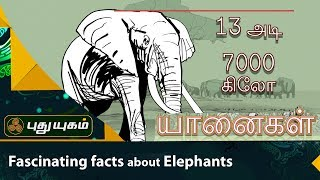 Fascinating facts about Elephants | Thuligal | Puthuyugam TV