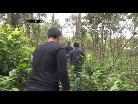 Pencarian Napi Yang Kabur di Perkebunan Warga