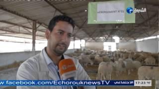 روبورتاج حول عملية بيع الكباش بالجزائر- قناة الشرروق -اعداد : مونية قاسمي