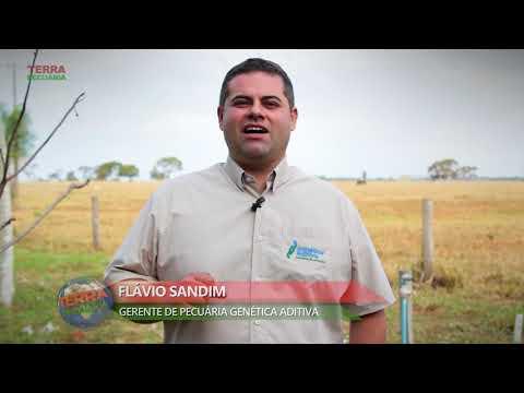 Confira o convite do Flavio Sandim para 7º Leilao Gir & Girolando Genetica Aditiva