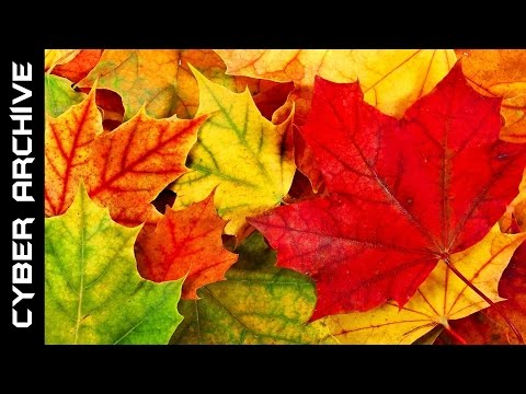 15 Interesting Facts About Autumn