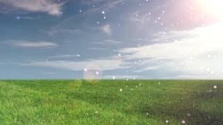 Футаж Фон Природы Золотое Поле в Лучах и Бликах видео фон для слайд-шоу
