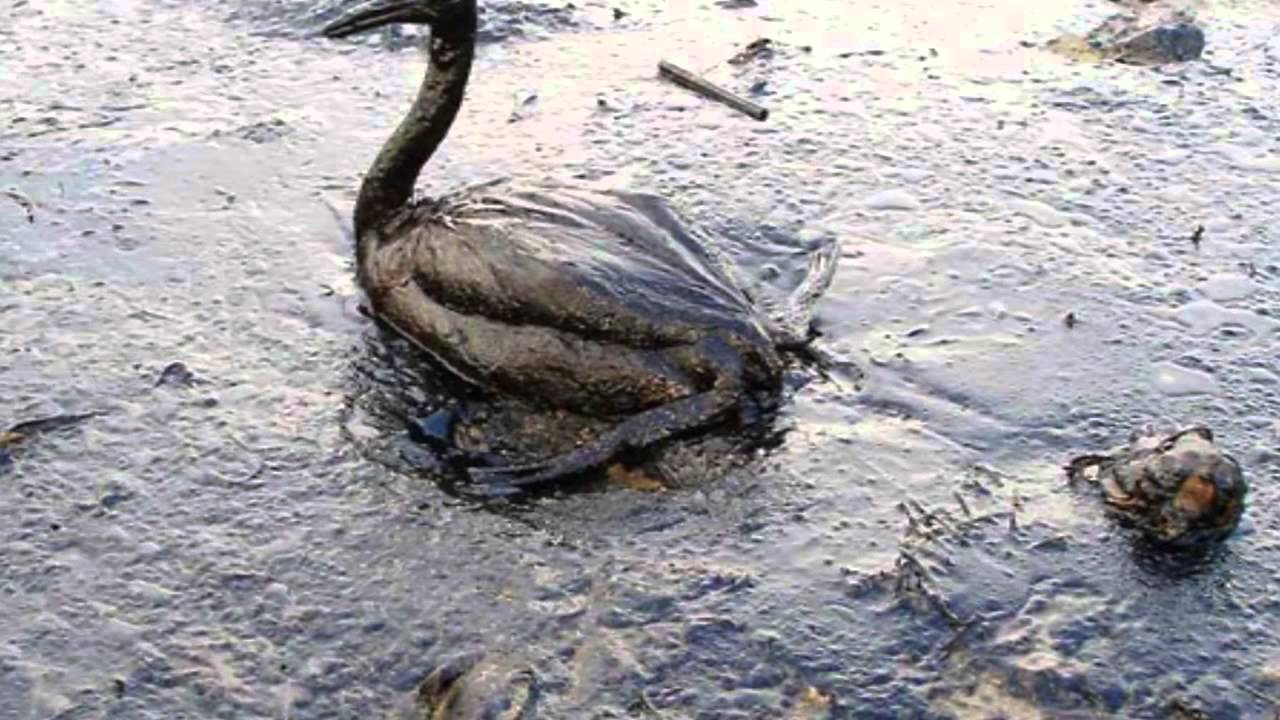 экологические проблемы фото