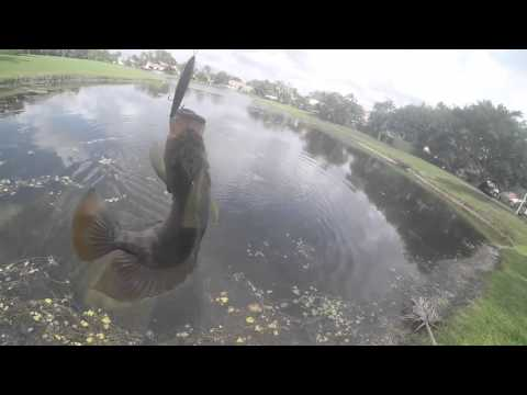Multi Species Fishing Florida Ponds And Canals