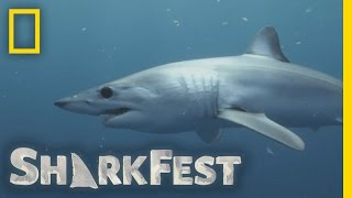 SharkFest Is Coming | Sharkfest