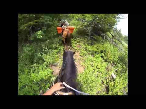 Pack Trip: Strawberry Creek Bob Marshall Wilderness