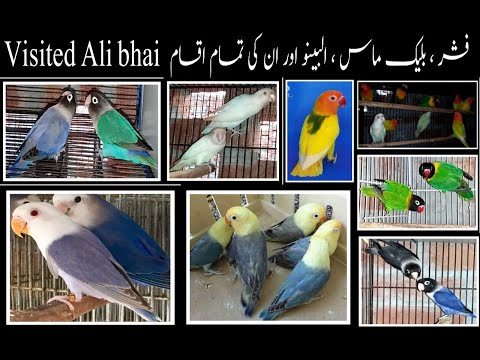 All Mukeshan Of Fisher Or Love Birds Visited Ali Bhai Monday July 27  Per Blue //black Mass And Etc.