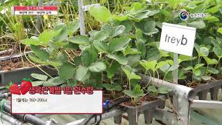 딸기 수경재배 - 2. 배양액 관리_배양액 급액