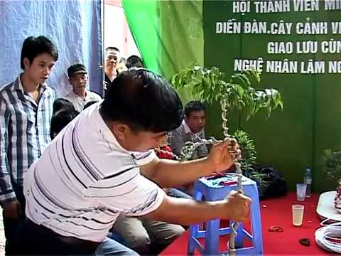 Nghệ nhân LNVinh hướng dẫn kỹ thuật tạo hình Bonsai P2.16 - Technical sharing trimming bonsai