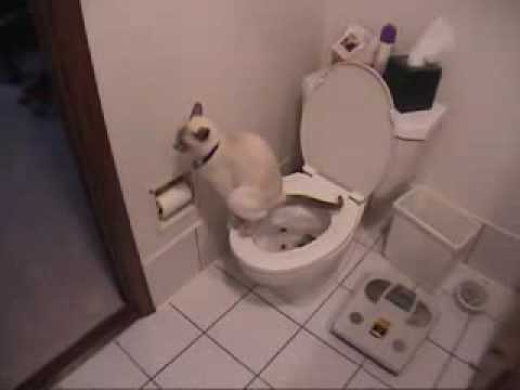 AMAZING Cat Trick – Train Your Cat to Use Toilet in Days!