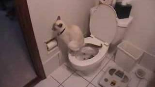 AMAZING Cat Trick - Train Your Cat to Use Toilet in Days!